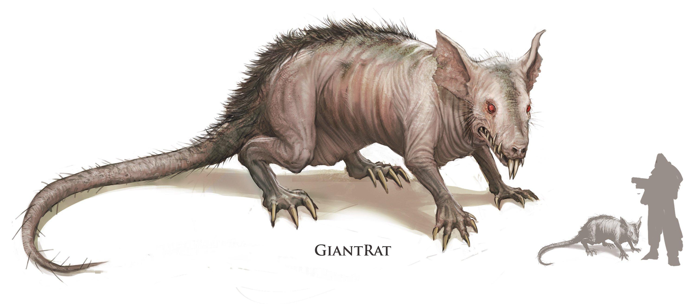 Ratto gigante