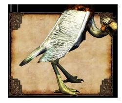 Avvoltoio di mare